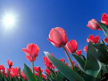Արարատի մարզպետ Գարիկ Սարգսյանի շնորհավորական ուղերձը՝ Մայրության և գեղեցկության տոնի կապակցությամբ